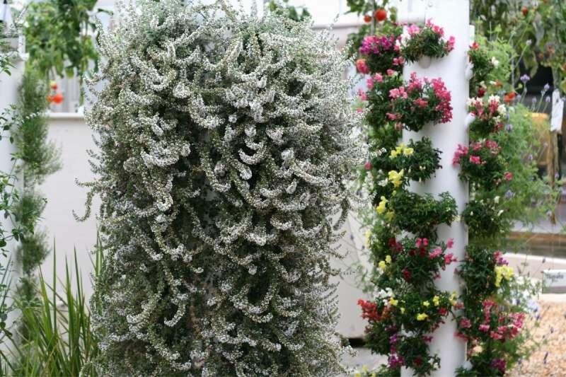 hydroponic flower growing